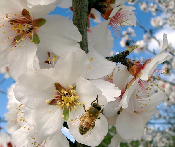 spring-has-sprung-5_l